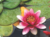 Flor de Lótus - Espaço Terapêutico