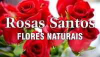 Rosas Santos - Flores E Plantas Naturais