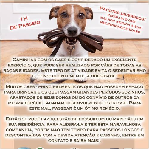 Dog Walker Morada em Morada de Laranjeiras - Produtos para