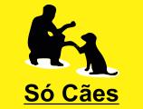 Só Cães- Adestramento